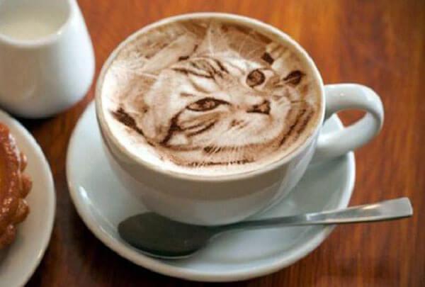 картинки кот с кофе